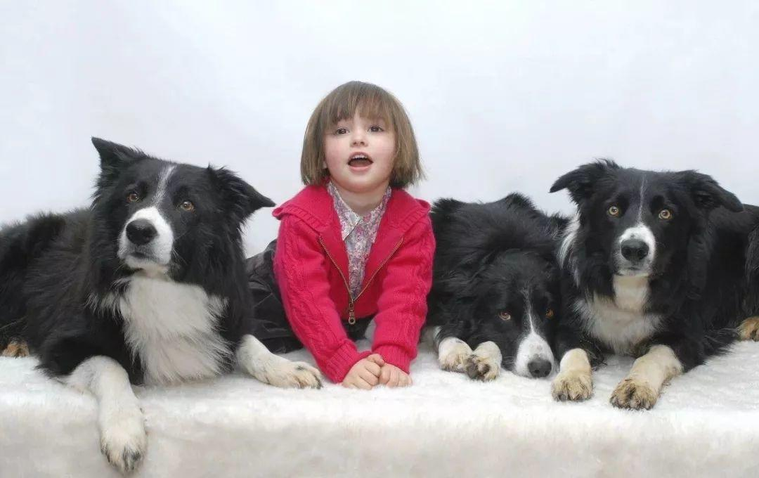Is Your Dog Happy? Ten Common Misconceptions About Dog Behavior