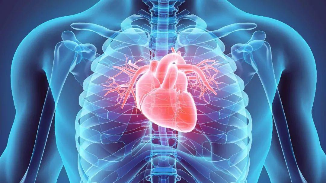 First Complete 3D-printed Heart! Heart Disease Can Be Cured?