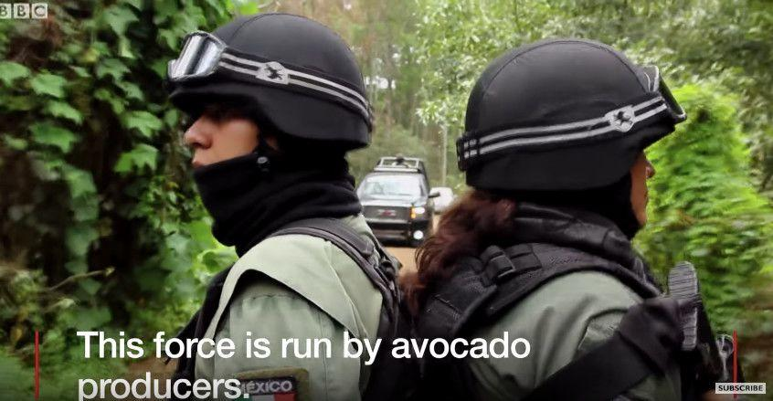 The Horrifying Truth About Avocados!