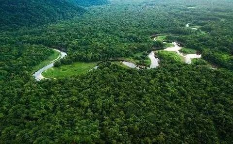 Heartbreak! Amazonia Burning for 3 Weeks Caused Global Concern!